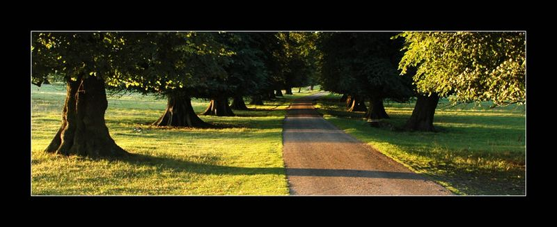 Calke Abbey Park