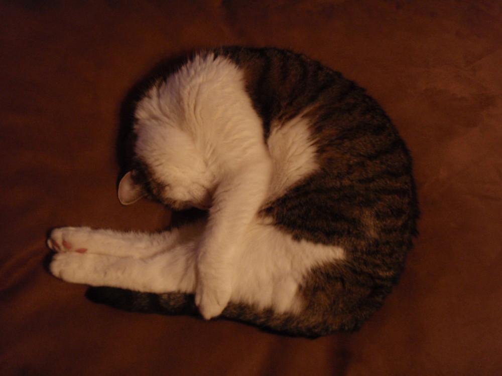 Calm cat
