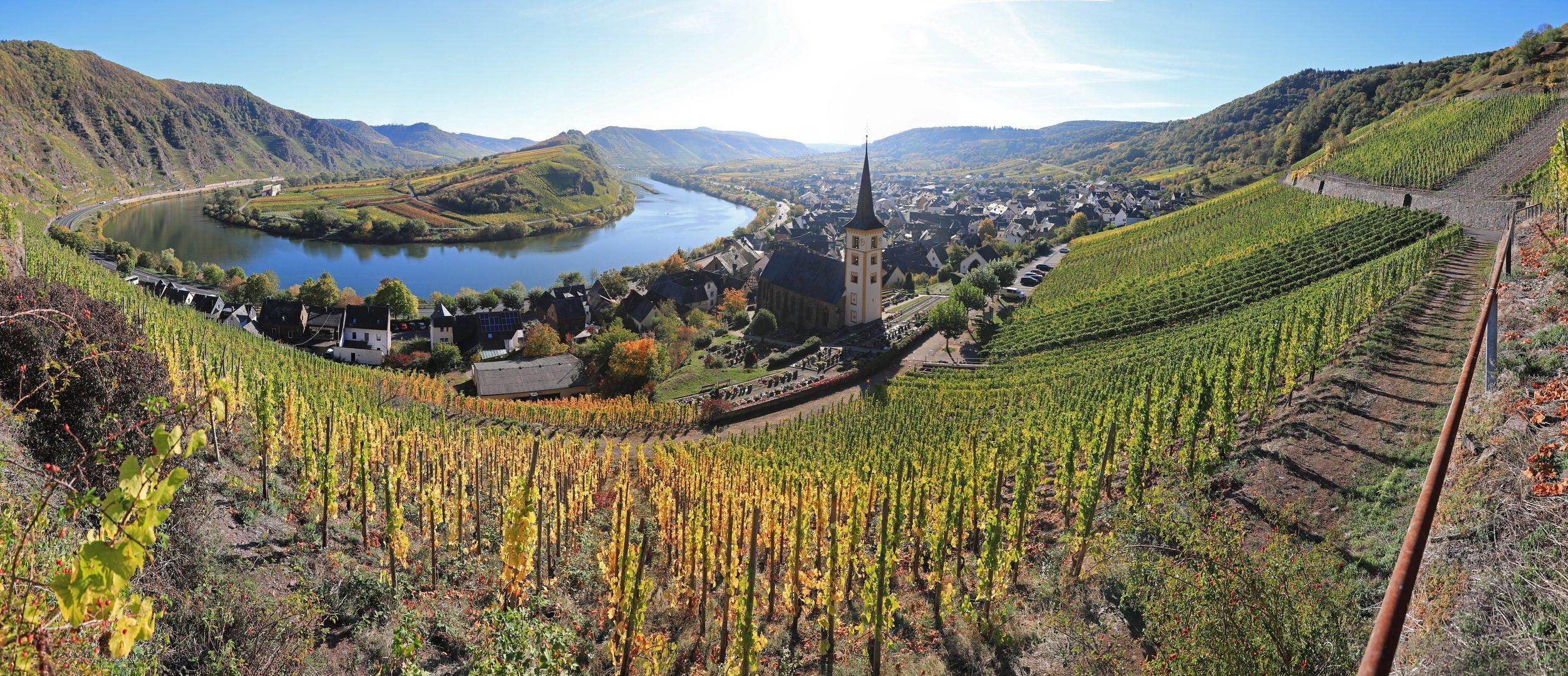 Calmont - die steilste Weinlage