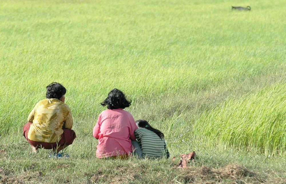 Cambodge 2006 Le Riz objet de toutes les attentions