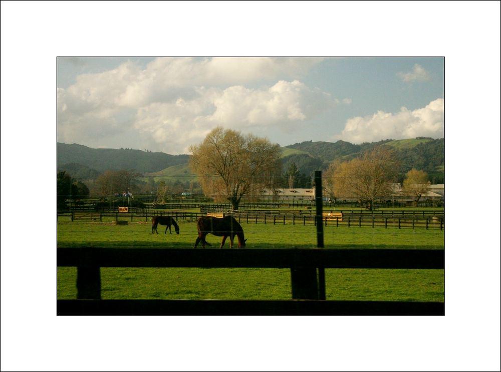 Cambridge Stud Farm