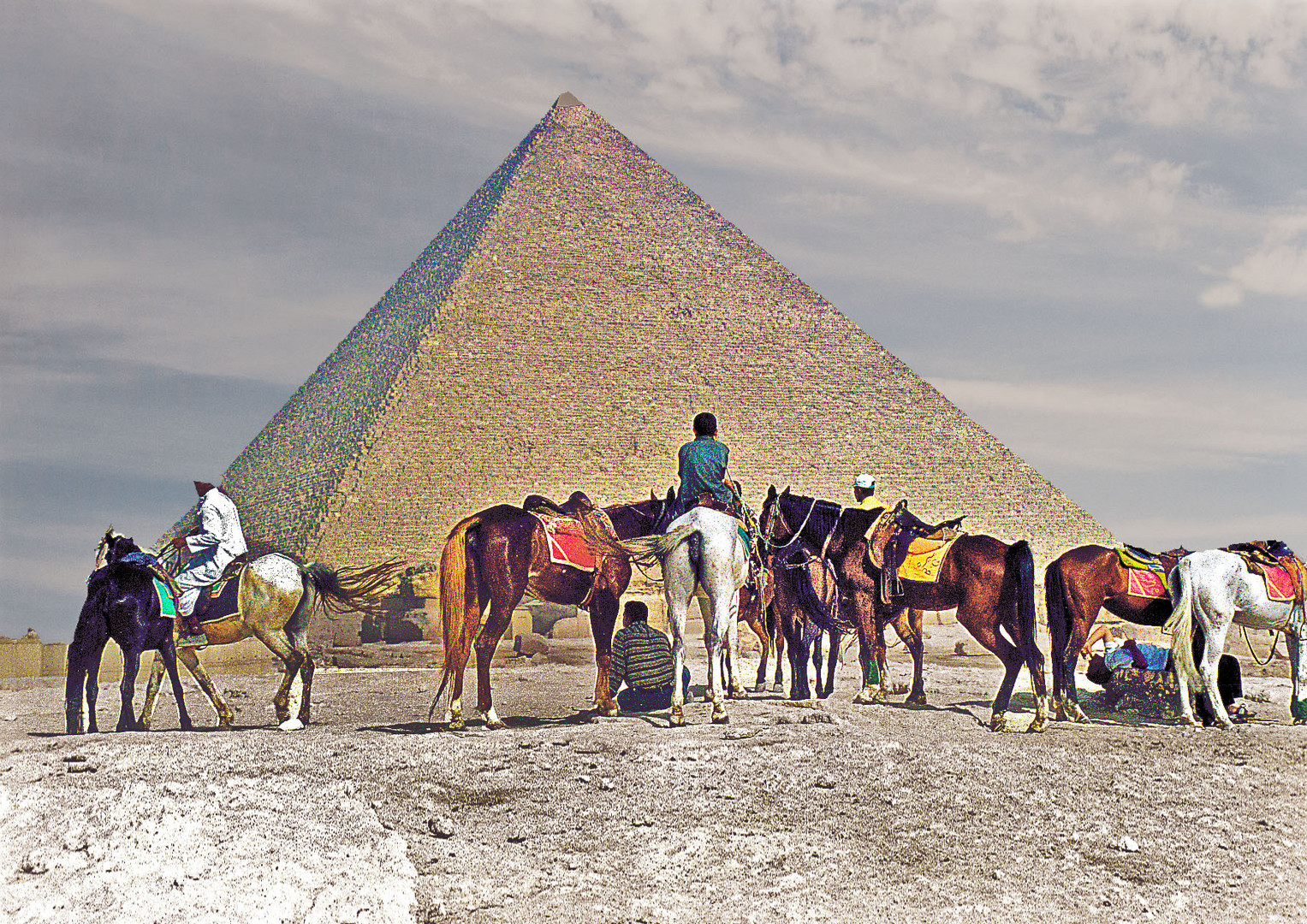 Camel and horse is my suitcase...