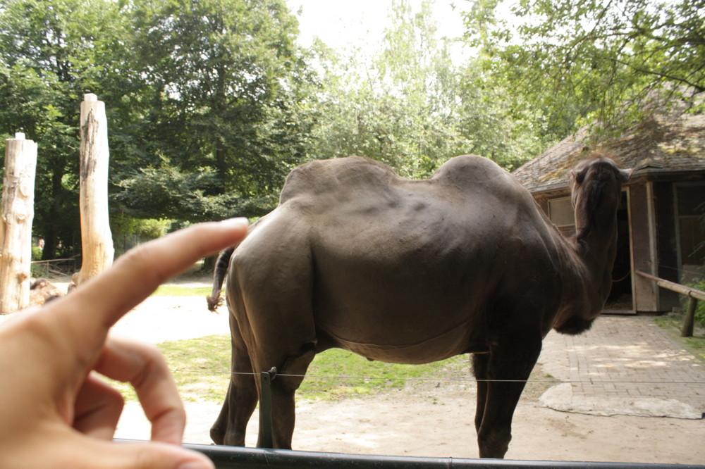 Camel dont smoke it!