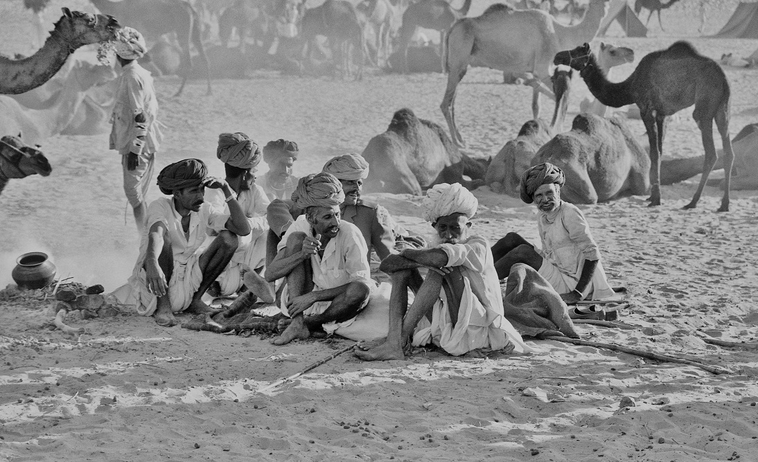 camel traders-part 2.