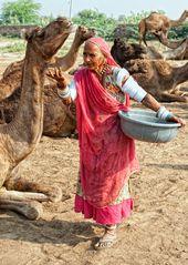 Camellera