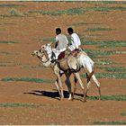 Camels................