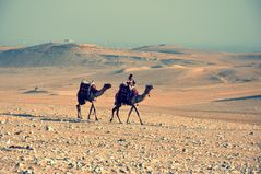 Camels at work