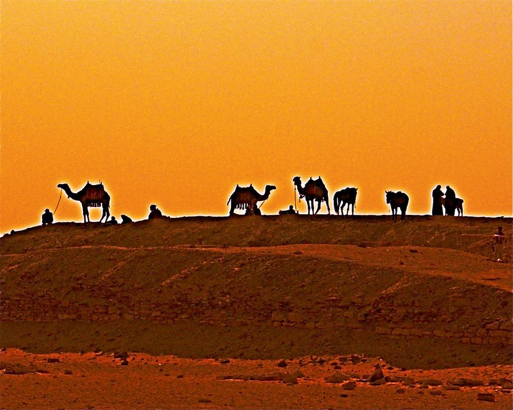 Camels Under the Sakkara Sun