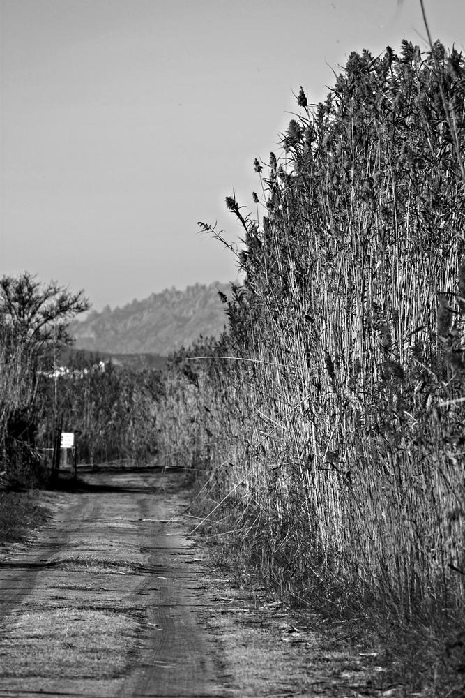Camí de canyes