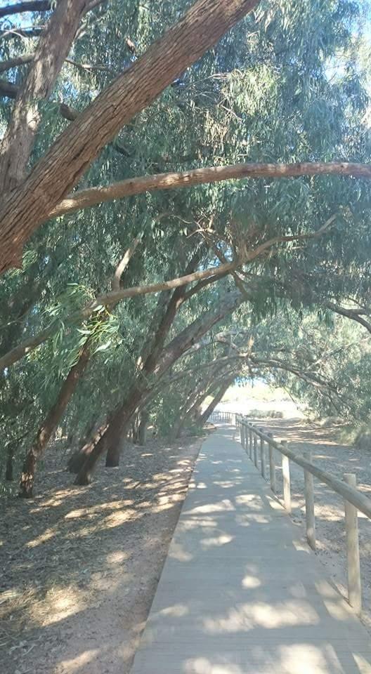 caminando bajo eucaliptos