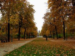 Caminando por la alfombra de hojas