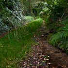 Camino a lo más denso del bosque