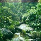 camino al  Salto Cristal - Paraguay