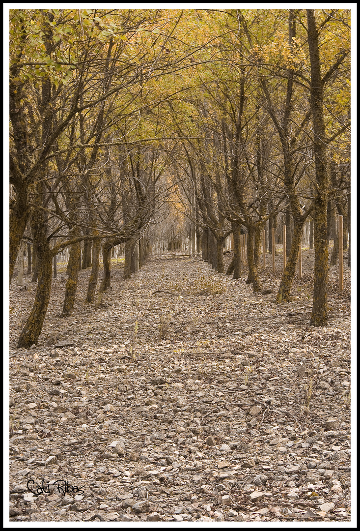 Camino de arboles