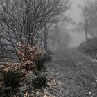 Camino de otoño 3