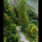 Camino del Alto Arán