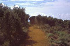 Camino del Uhuru Peak