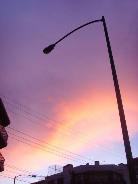 Camino purpura
