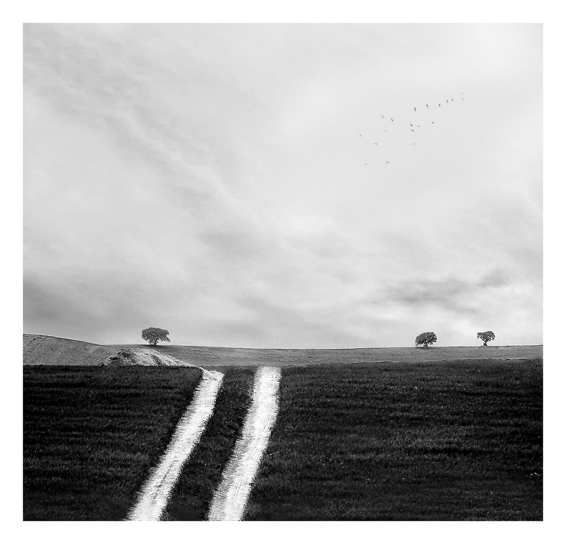Caminos paralelos