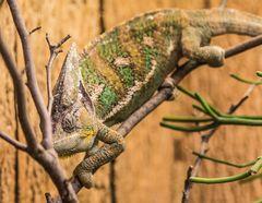 camouflage Modus :-)
