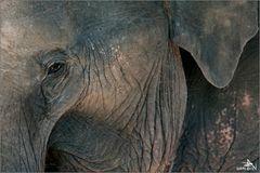 Camp d'éléphants de Green Hill Valley (01)
