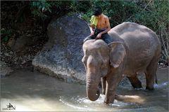 Camp d'éléphants de Green Hill Valley (02)