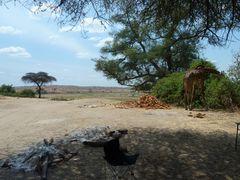 Camp Giraffe...