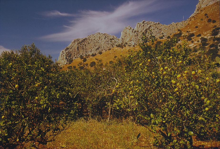 Campagna bei Punta Raisi III