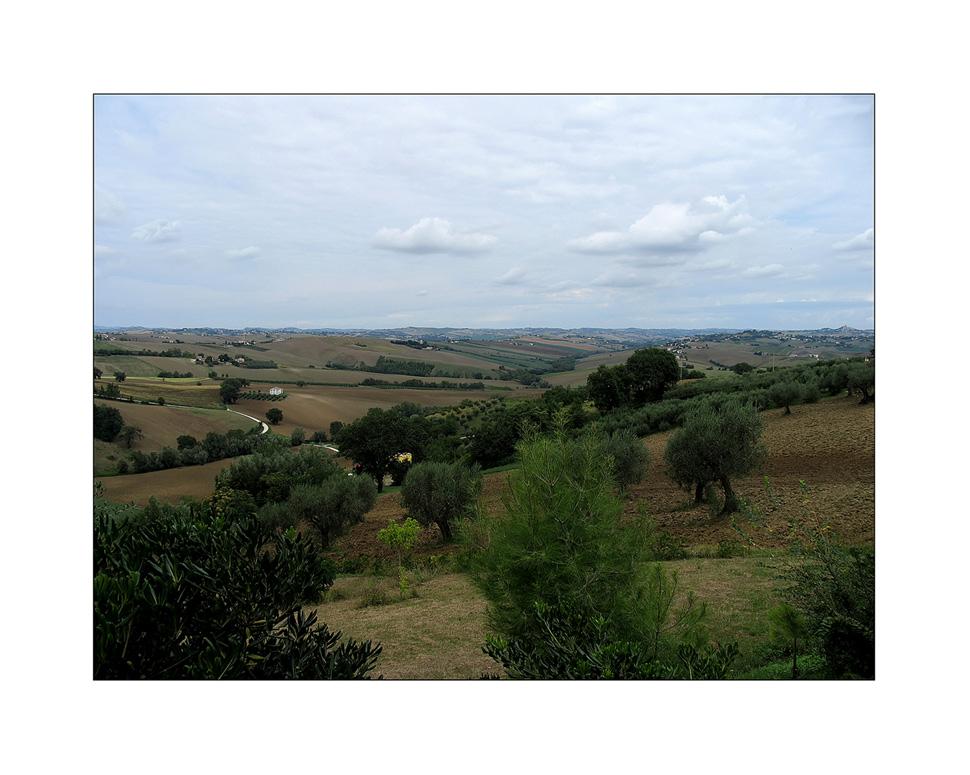 Campagna marchigiana (3)