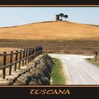 Campagna Toscana - Bibbona (LI)