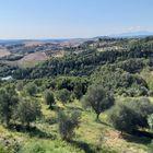 Campagna Toscana estiva