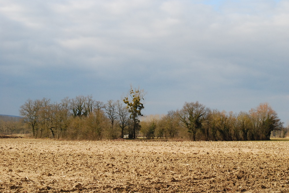 Campagne