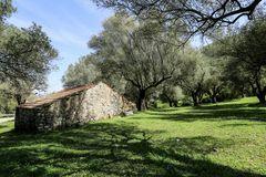 Campania (7)