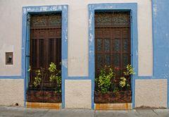 Campeche - So viel Grün muss sein...