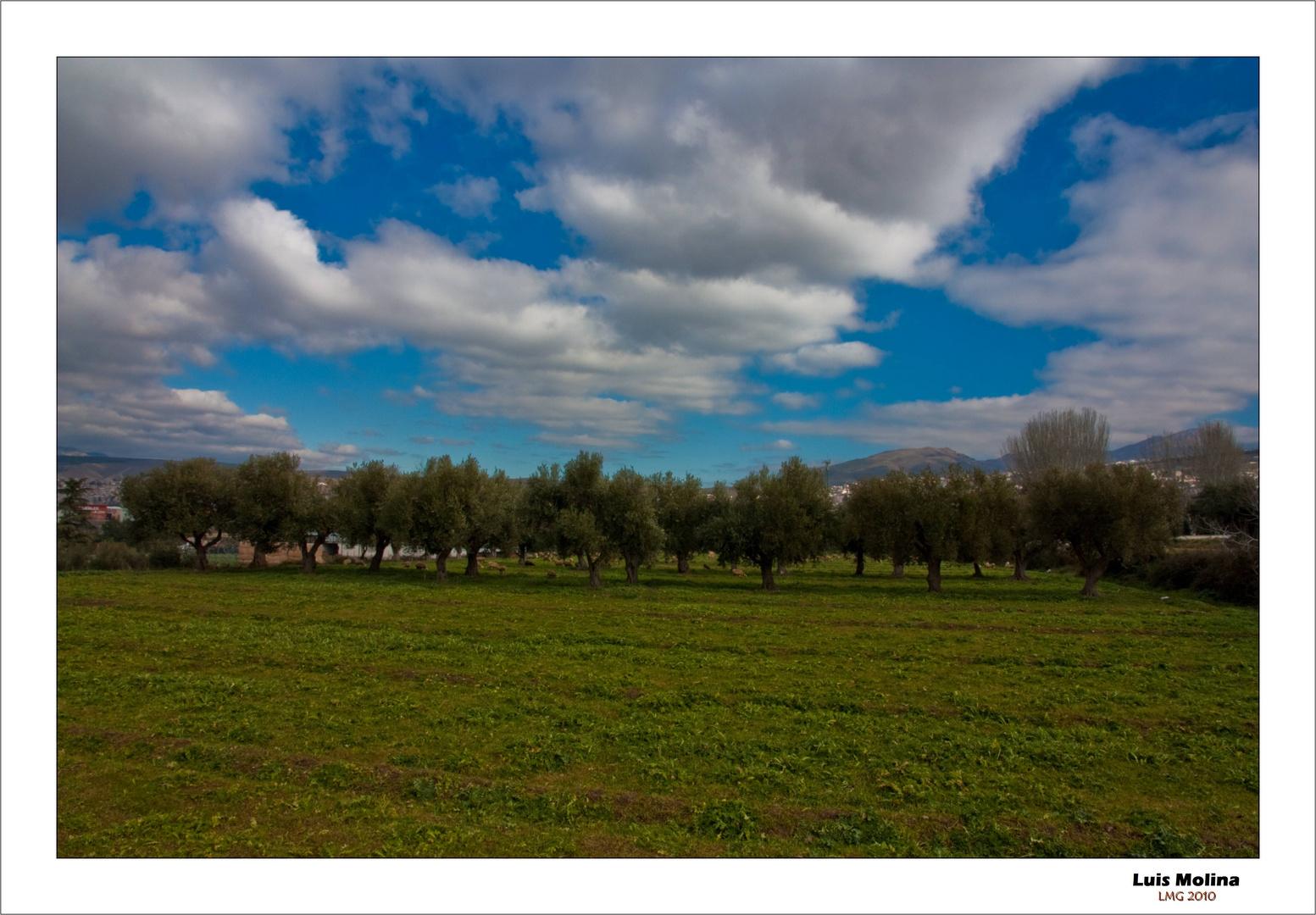 Campo de Olivos