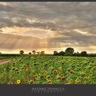 Campo di girasoli in Borgogna