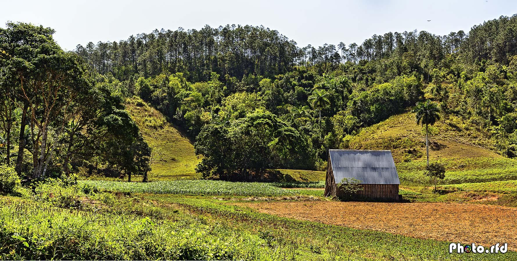 Campos de Pinar del Río