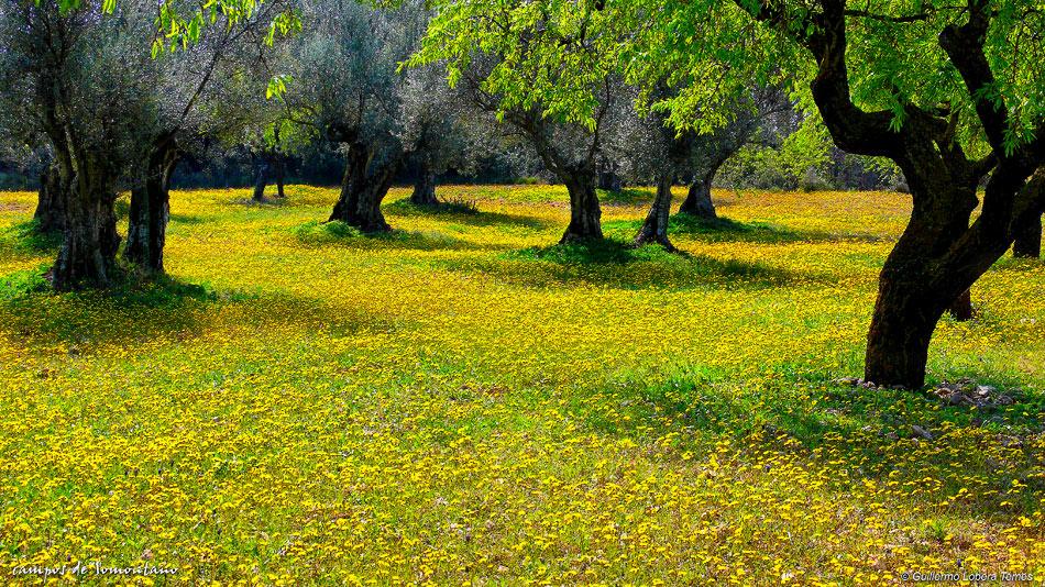 campos de Somontano