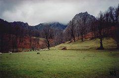 Campos en Asturias