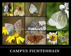 Campus Fichtenhain NR.4