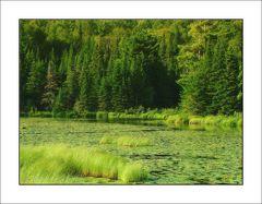 CANADA - Algonquin Park