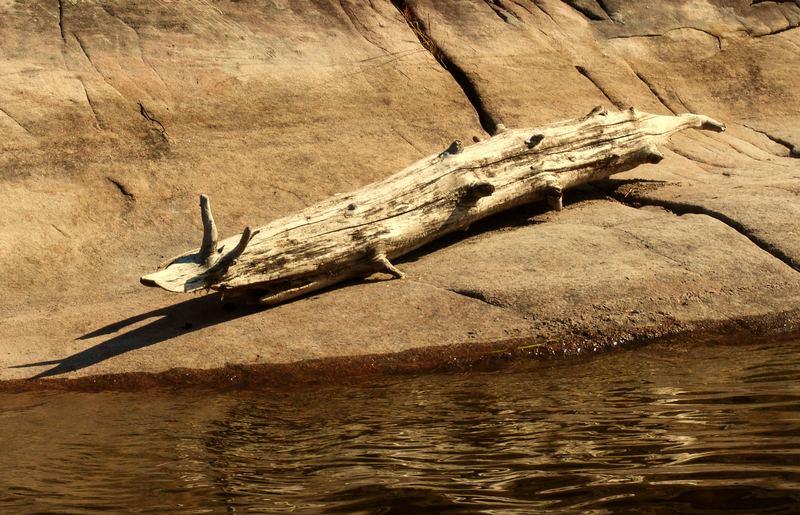 Canadian Crocodile