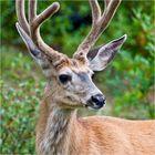 [ Canadian Wildlife ]