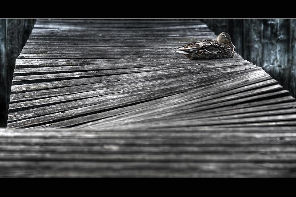 canard dormand