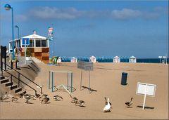 Canards à la plage