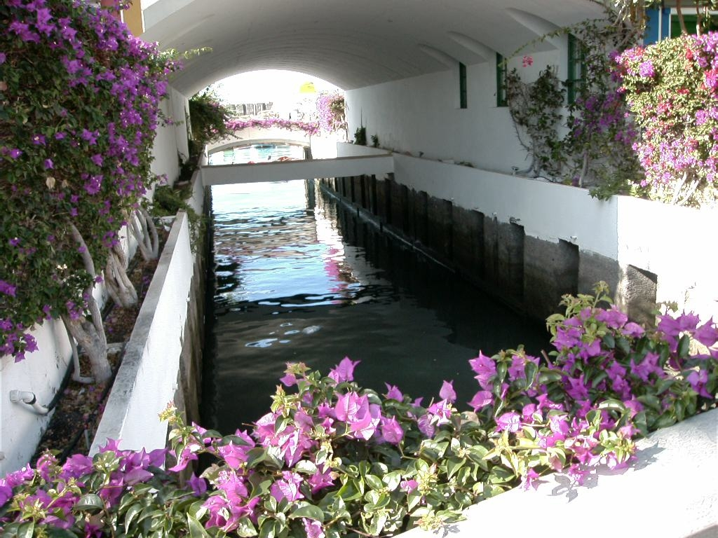 CANARIES le petit Venise