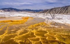 Canary Spring, Mammoth Hot Springs, Wyoming, USA