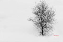 Candido inverno