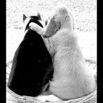 cane&gatto