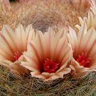 Canidez en Flor